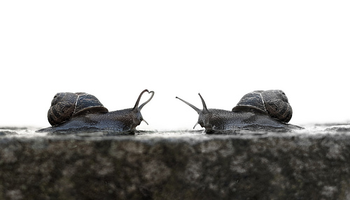 Snails by Adam Foster Flickr cc