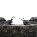 snails_medium_3589690234
