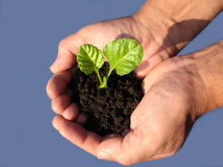 Sprout_iStock_000000951888Smallest.jpg